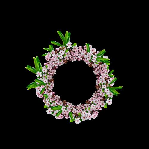 «Marta_FloweringCherries» 0_902a4_814878cf_L
