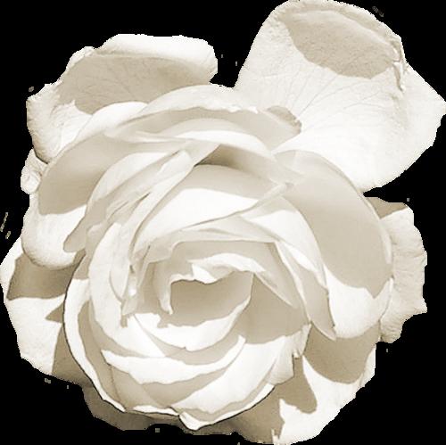 «Forgiven» 0_90afc_92883f47_L