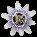 «Lavender Time» 0_90c0a_57ea41ea_S