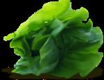«kimla_Spring_Cooking»  0_9107e_f8663337_S