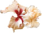 feli_nb_exotic flower2.png