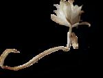 ldavi-ThePoet'sKeepsakes-strawflower4.png