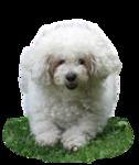 1381_-_dog_-_LB_TUBES.png