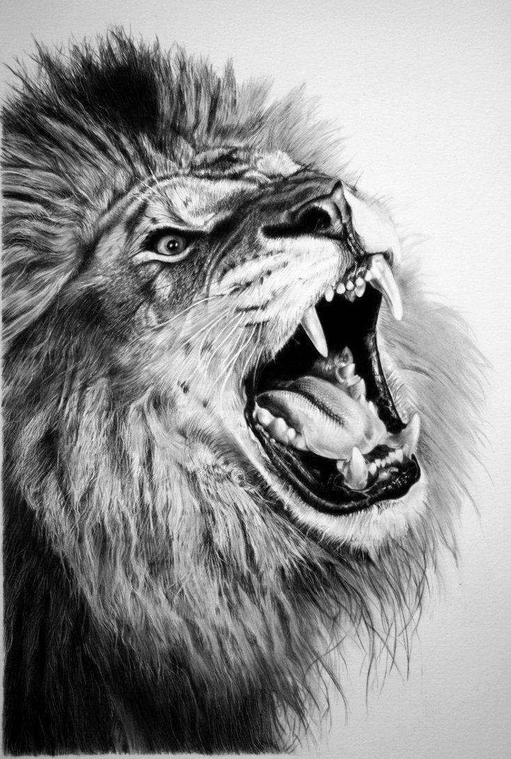 рисунки карандашом звери: