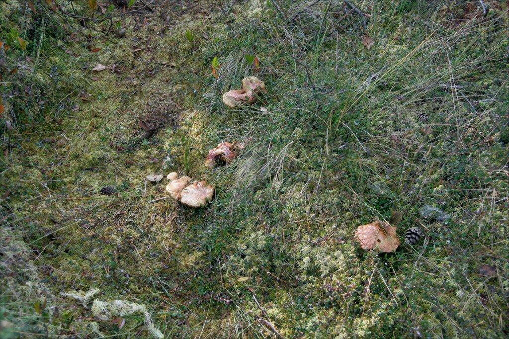 Журавлиная родина, грибы