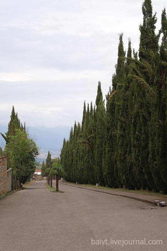Цинандали. Кипарисовая аллея, вид сверху из поместья князей Чавчавадзе.