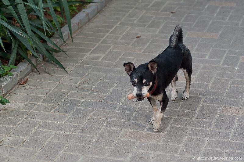 Собака с сосиской