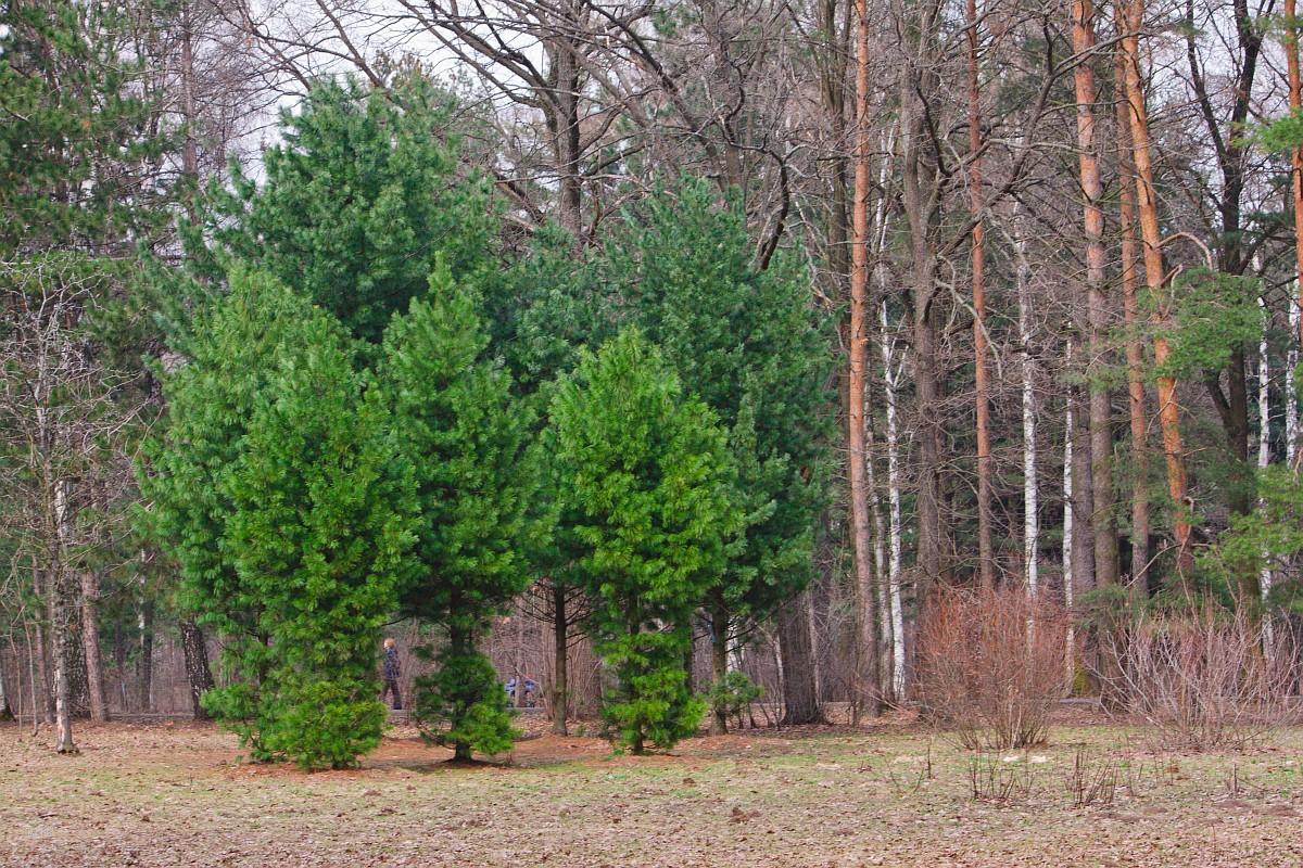 Ботанический сад 2012-04-21