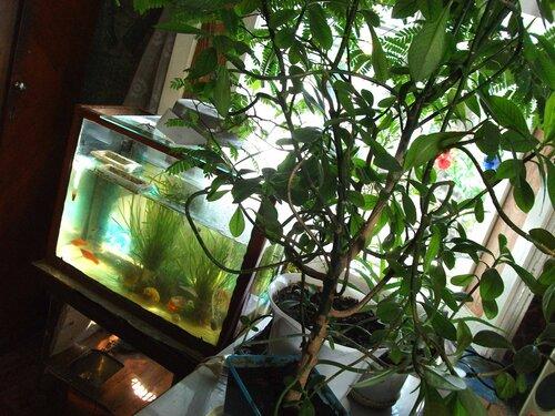 Общий вид домика черепахи и аквариума