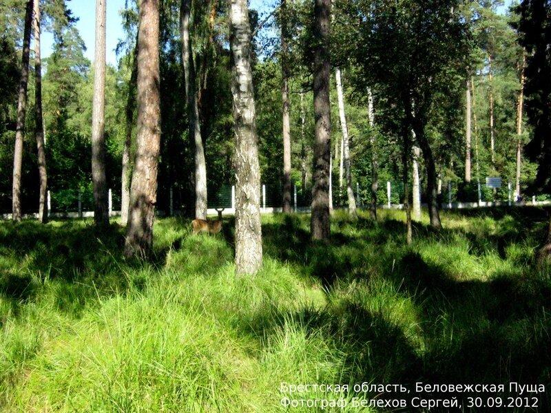 Беларусь, природа