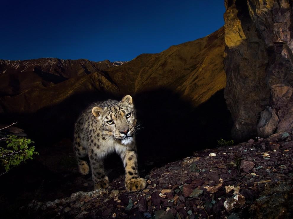 Лучшие фотографии National Geographic Russia в ноябре