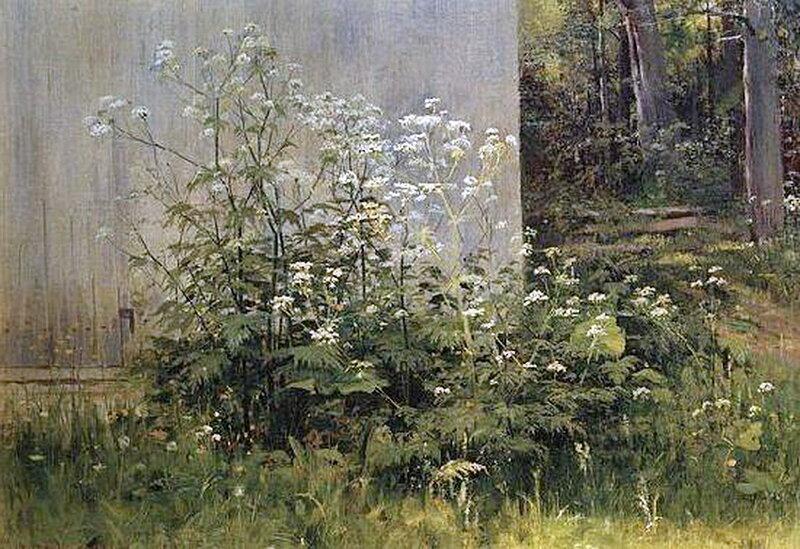 Цветы у забора. 1880 г. И.И. Шишкин.jpg