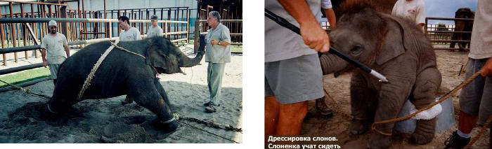 Жестокое обращение с животными в цирке