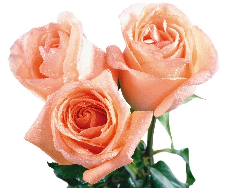 заказать цветы и подарки на праздник срочная доставка волжский