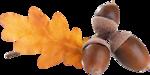 acorns51.png