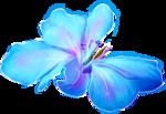NLD Flower 2 b.png