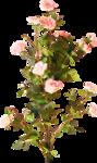 цветы (117).png