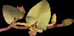 Lilas_Old-Garden_elmt (39).png