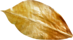 Lilas_Old-Garden_elmt (100).png