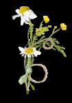 Palvinka_FlowerAdventure_cluster3sh.png