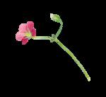 Palvinka_FlowerAdventure_flower8.png