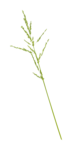 Palvinka_FlowerAdventure_grass1.png