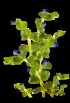 Kdesigns_forestfruits_el2.png