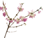 ial_llv_blooming_branch1.png