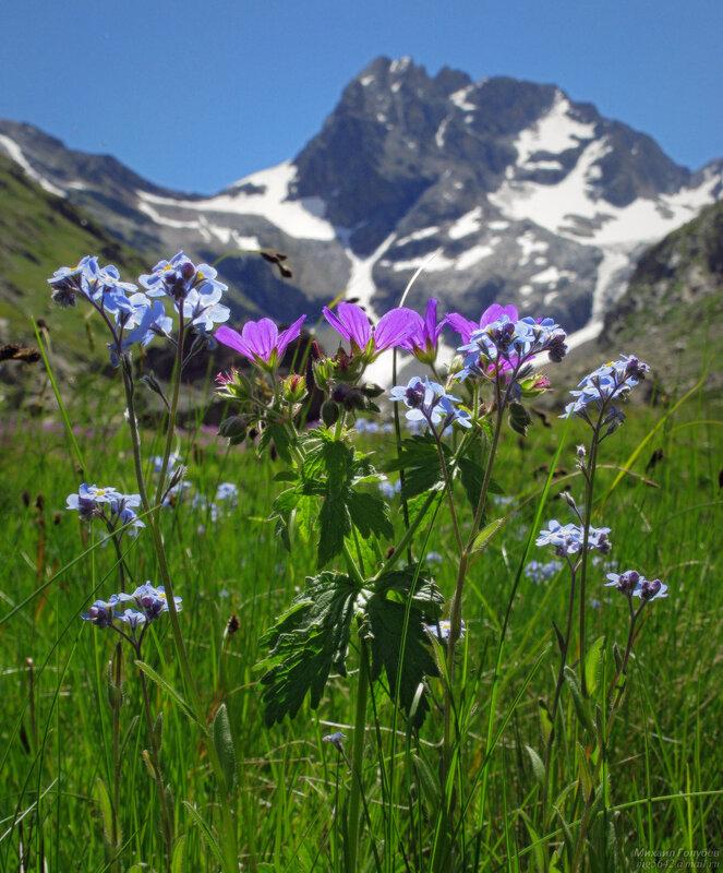 Цветы на  горных вершинах Кавказских гор