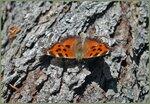 Бабочка-в-парке.jpg