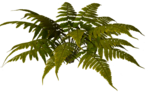 R11 - Nature Time 1 - Fern - 011.png