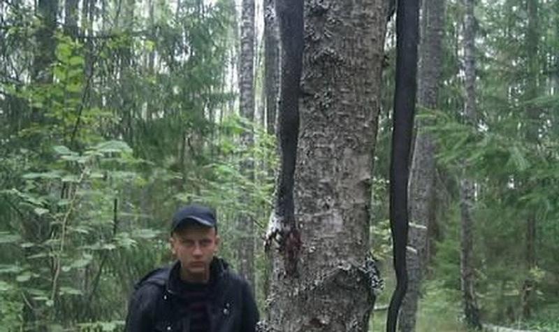 В Псковской области поймали 4-х метровую змею