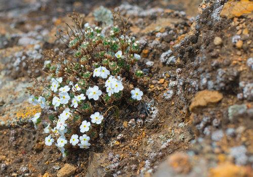 Цветы на скалах