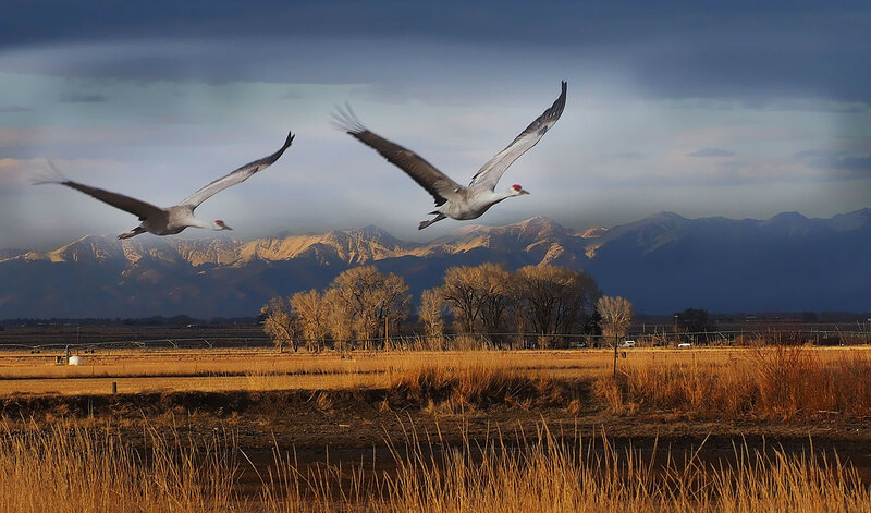 Журавли, журавли, вы небесные птицы