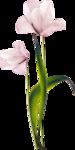 «Dreamin Pink» 0_99b0c_e5606b3f_S