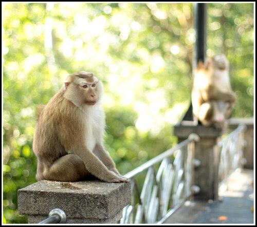 фото из Таиланда