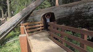 секвойя парк