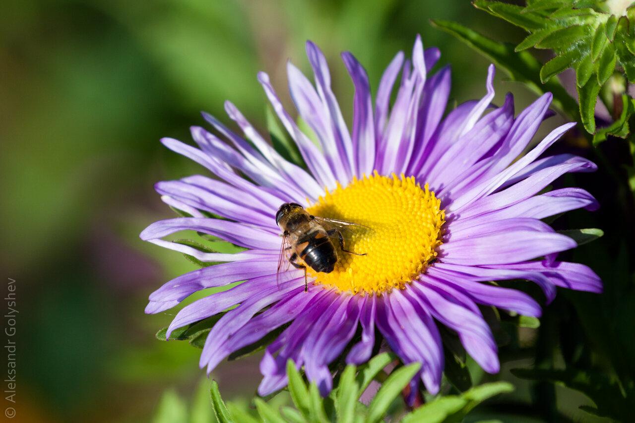 Муха на цветке