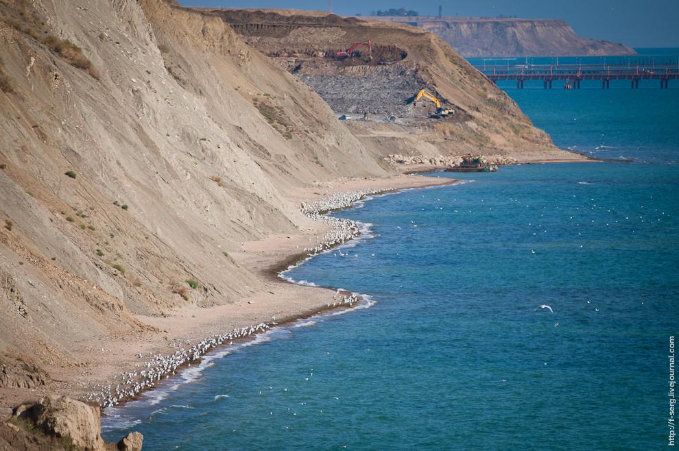 Миди на скале Жаба (Тамань) (2012-09-15)