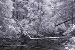 Фото Вячеслав Зитев. Canon 20D (IR), монокль 33 мм
