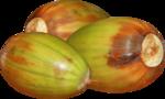 acorns32.png