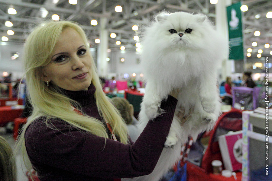 Кошка Iris Silver Garth. Персидская. Окрас: черная шиншилла. Родилась 29 августа 2011 года. Владелец: Марунич Т. Клуб «Кэт Стронг», Москва
