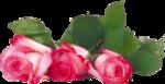 цветы (102).png