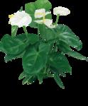цветы (14).png