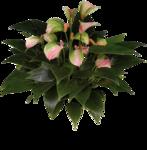 цветы (15).png