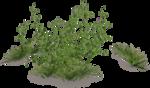цветы (185).png