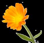 цветы (187).png