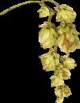 Lilas_Old-Garden_elmt (102).png