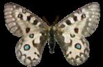 jbillingsley-autumnbreeze-butterfly2.png