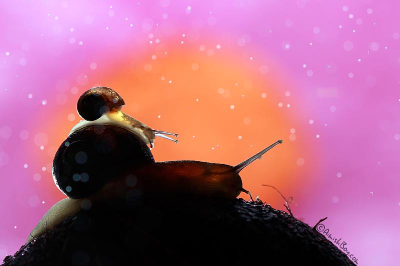 Волшебное макро by Nadav Bagim